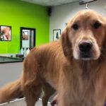 PJ Noah PetSalon Dog Grooming