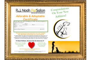 PJ Noah PetSalon certificate