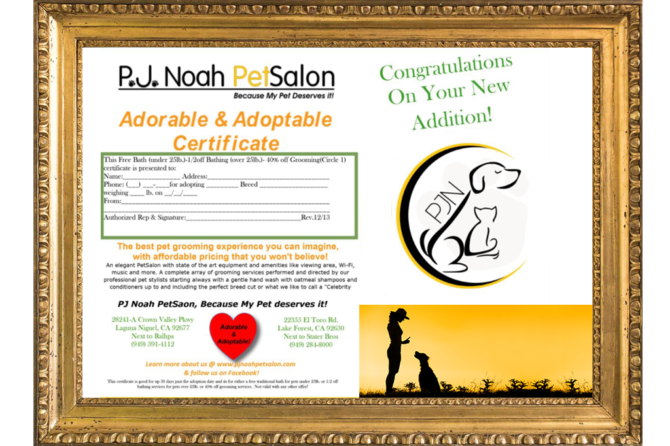 Adore & Adopt Certificate